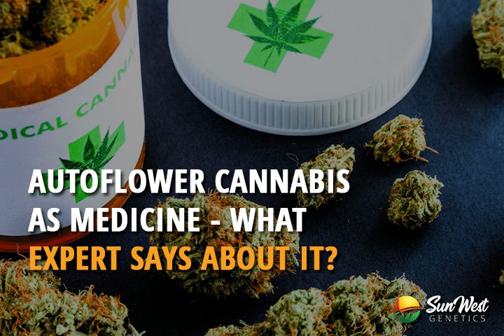 Autoflower Cannabis as Medicine: What Expert Says About it?