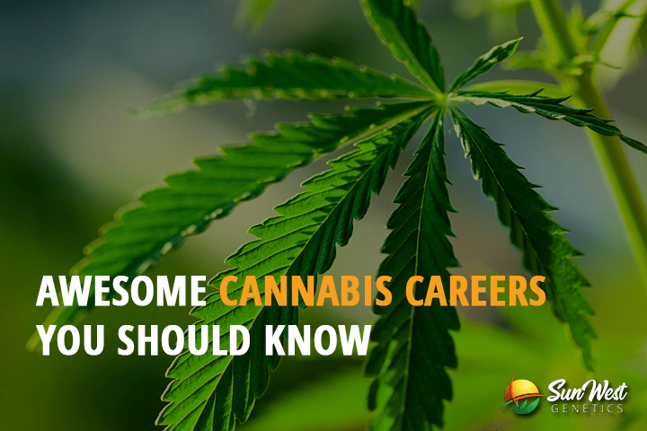 Awesome Cannabis Career s You Should Know