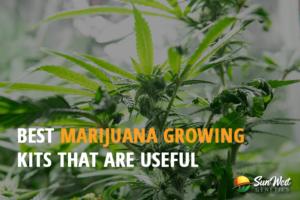 marijuana growing kit