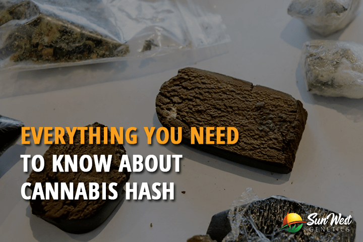 Everything You Need to Know About Cannabis Hash