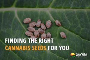 cannabis seeds for sale usa
