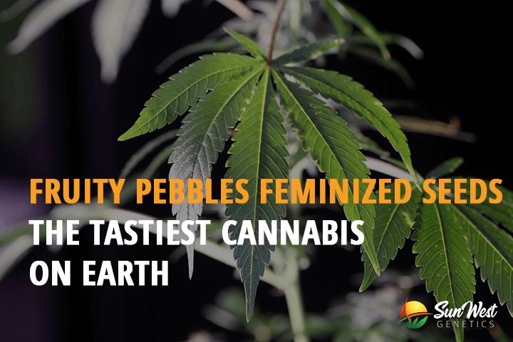 fruity pebbles feminized seeds