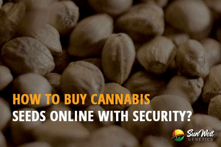 How to Buy Cannabis Seeds Online with Security