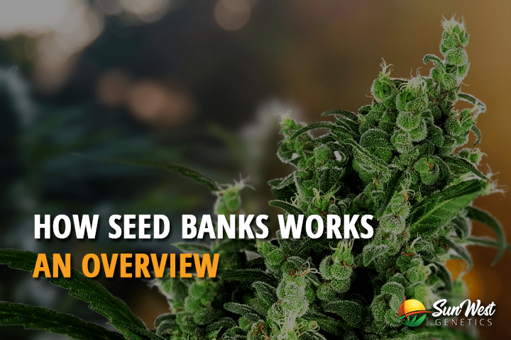 How Seed Banks Works: An Overview