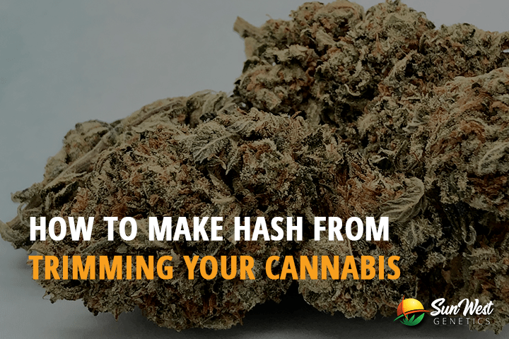 How to Make Hash from Trimmings of Your Cannabis