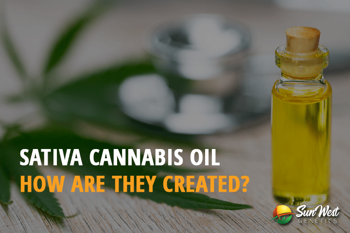 Sativa Cannabis Oil: How are They Created?