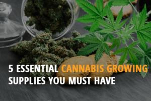 autoflowering marijuana seeds for sale
