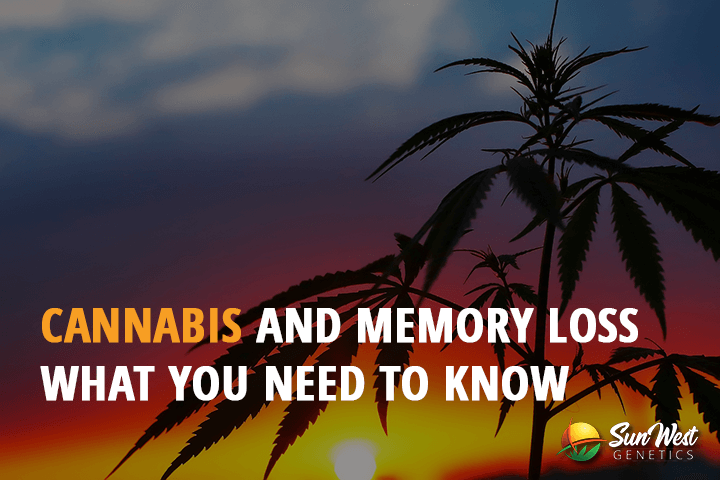 cannabis for memory loss