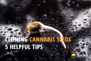 cloning cannabis seeds