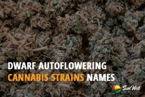 dwarf autoflowering cannabis seeds