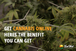 cannabis seeds for sale usa online