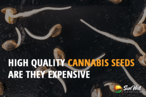 high-quality cannabis seeds
