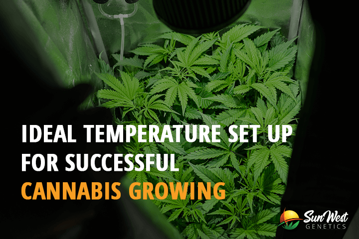 cannabis growing temperatures