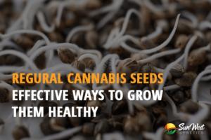 regular cannabis seeds for sale