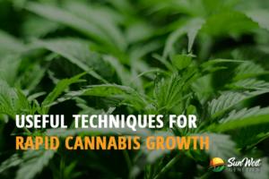rapid cannabis growth
