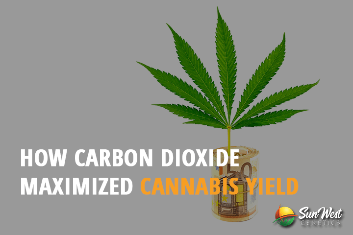 carbon dioxide maximizes cannabis yield