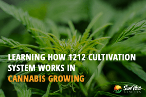 1212 cultivation cannabis growing