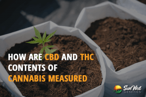 cannabis cbd and thc contents