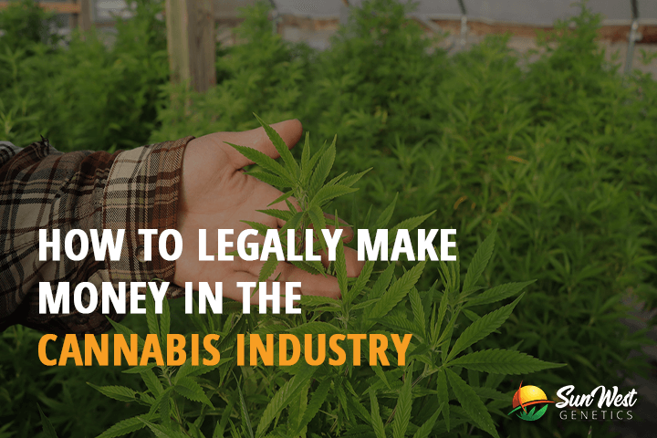 making money legally in the cannabis industry